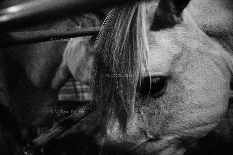 Horses stand in a stable at the fairgrounds in Great Falls, Montana, USA.