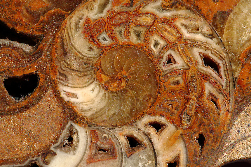 A detailed image of the center of a fossil shell. Digitally Improved Photo.