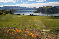 New Zealand, South Island, Otago region, Wanaka: Rippon Vineyard on Lake Wanaka | Neuseeland, Suedinsel, Region Otago, Wanaka: Rippon Weingut am Lake Wanaka