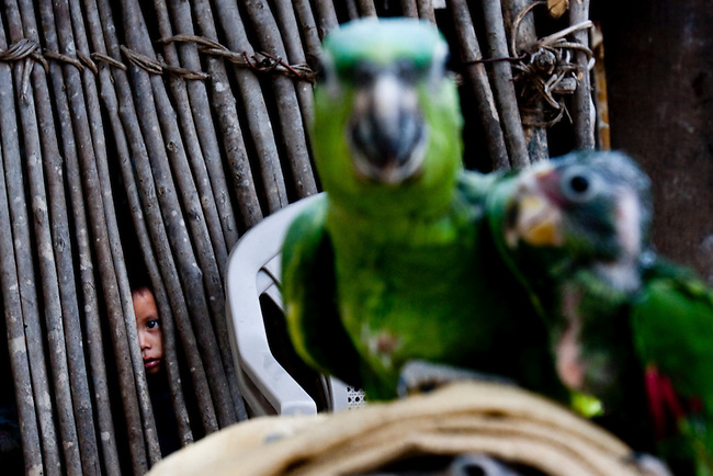 A boy peers out from his house at a poached parrot inside the Mayan Biosphere.