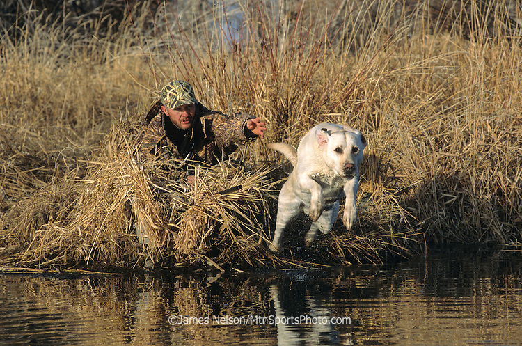 34-607. A hunter sends a yellow Labrador retriever after downed waterfowl on the Snake River, Idaho.