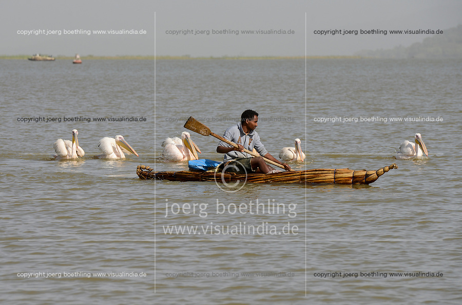 ETHIOPIA , Bahar Dar, lake Tana, fisherman with papyrus boat , behind pelicano birds/ AETHIOPIEN, Bahir Dar, See Tana, Fischer mit Papyrusboot