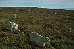 Hill O' Many Stanes, Nr Lybster, Caithness, Highland  Scotland. Mysterious Britain published by Orion
