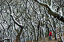 2014_12_29_frozen_woodland
