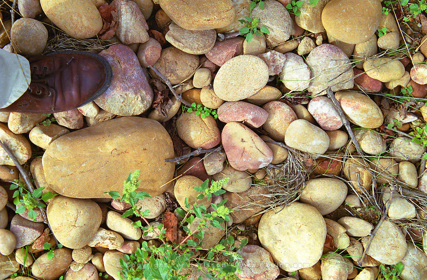 The typical soil in Chateauneuf, big stone pebbles called galet galets with, for comparison a mans foot shoe to the left  Chateau Mont-Redon, Chateauneuf-du-Pape Châteauneuf, Vaucluse, France, Europe