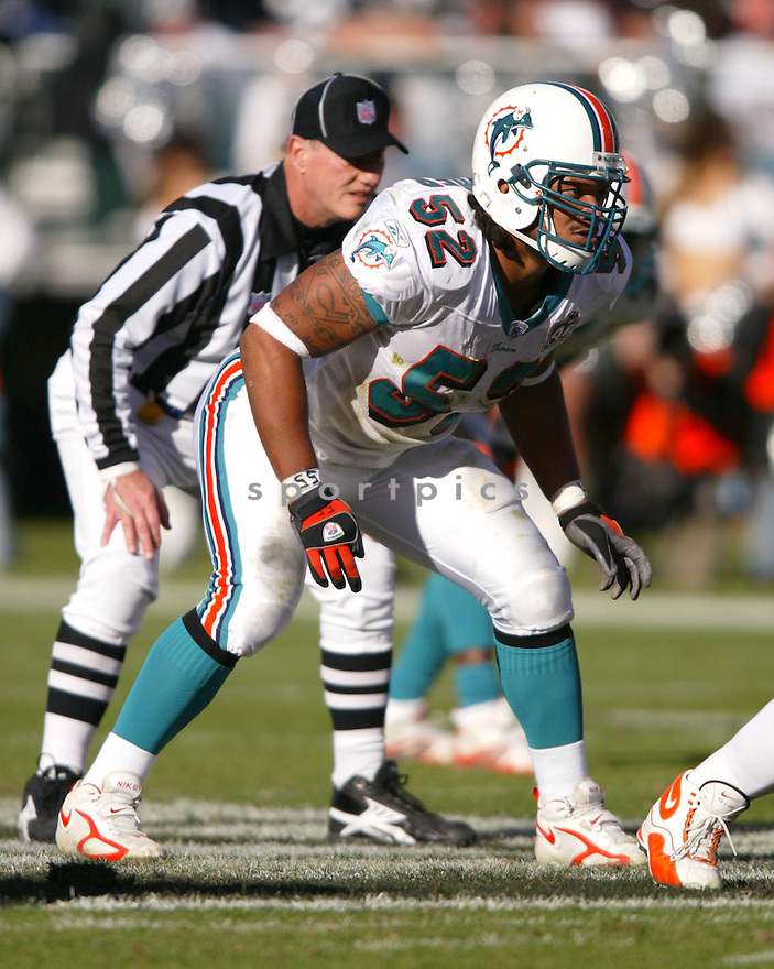 Channing Crowder, of the Miami Dolphins, in action against the Oakland Raiders on November 27, 2005...Rob Holt / SportPics..Miami wins 33-21