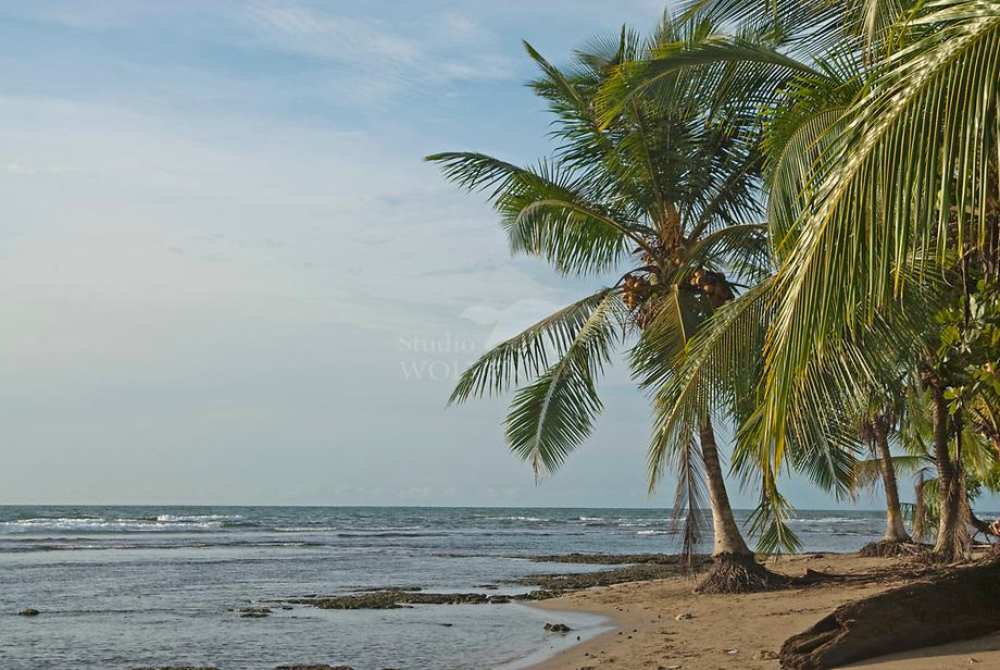 Palmen aan de Caribische kust, Cahuita / Costa Rica