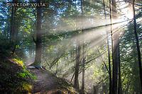 Matt Davis Trail, Mount Tamalpais State Park