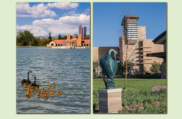 Canada geese in City Park (left) and the  Wildlife Center in south Denver. .  John leads private, wildlife photo tours throughout Colorado. Year-round. .  John offers private photo tours in Denver, Boulder and throughout Colorado. Year-round Colorado photo tours.