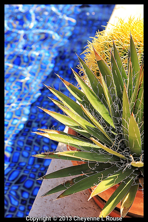 Desert contrast - Arizona<br />