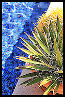 Desert contrast - Arizona<br /> Yucca and cactus next to water<br /> &copy; 2013 Cheyenne L Rouse/All rights reserved.