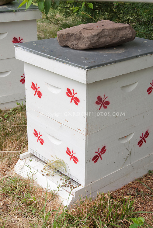 Beekeeping and beehives with bees, showing white bee hive with painted red bees, Langsthroth bee hive