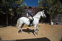 Award photos Horse Show 2016