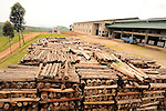 Timber piles stacked at a western Uganda tea factory..The wood will be used for drying harvested leaves.