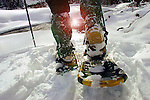 snowshoeing, Wasatch-Cache Natl. Forest.northern Utah, USA file #2868