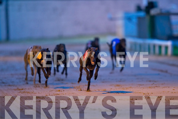 RACE OF CHAMPIONS: Deerfield Music no.1 winner of the Paddy O'Sullivan Race of Champions Final with a new 550 track record of 29:52 2nd was Pablo Supreme no.5 and 3rd was Rattling Tank no.3 at the Kerry GAA Night at the Dogs at the Kingdom Greyhound Stadium on Friday.