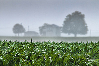 Rain  storm soaks field of corn on an Ohio farm..