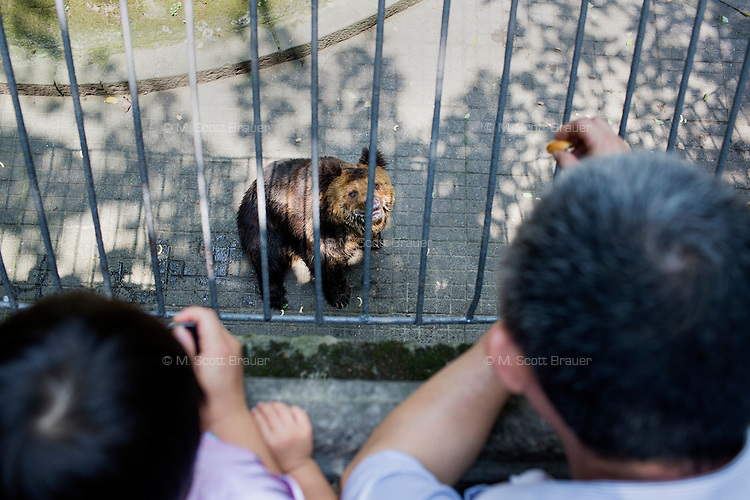 A Tibetan Bear begs for food from a crowd above its cage in the zoo in Chongqing, China. The bear stood and turned in circles for the gathered crowd, many of whom threw junk food down into the enclosure.