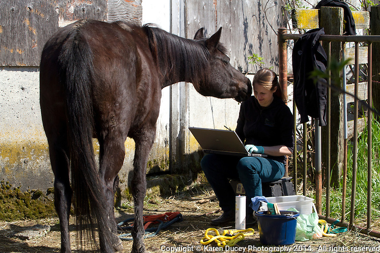 Veterinarian Hannah Mueller, DVM, creates records of horses on Summer Raffo's farm in Oso, Wash. during a voluntary visit on April 1, 2014. The 16 horses belong to Summer Raffo, who died in the Oso mudslide on March 22, 2014. Along with help from another vet and volunteers the horses received basic vet care, grooming and were fed fresh hay. Mueller is co-founder and vice president of the Northwest Equine Stewardship Center and practice owner of Cedarbrook Veterinary Care in Snohomish, Wash.