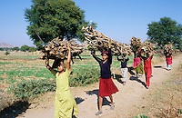 INDIA Rajasthan, women and girls carry firewoods in village for cooking fuel / INDIEN Rajasthan, Frauen und Kinder tragen Feuerholz zum Kochen ins Dorf