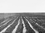 Jerome ID:  Irrigating the fields - 1911.  Brady Stewart and three friends went to Idaho on a lark from 1909 thru early 1912. As part of the Mondell Homestead Act, they received a land grant of 160 acres north of the Snake River.  For 2 ½  years, Brady Stewart photographed the adventures of farming along with the spectacular landscapes.