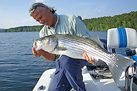 Angler with trophy striped bass caught in Lake Ouachita, Arkansas