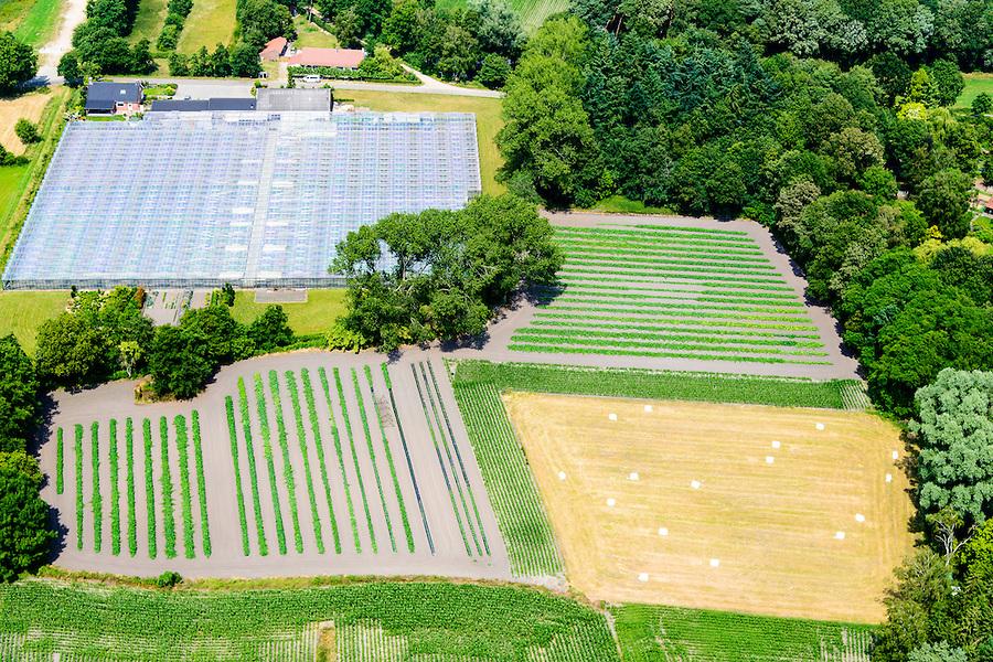 Nederland, Limburg, Gemeente Maasgouw, 26-06-2014; tuinderij  met kassen en akkers met groentebedden.<br /> Market garden with greenhouses and fields with vegetable beds.<br /> luchtfoto (toeslag op standaard tarieven);<br /> aerial photo (additional fee required);<br /> copyright foto/photo Siebe Swart.