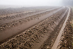 Deep furrows in soil of foggy field being prepared for potato crop, Shottisham, Suffolk, England