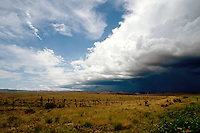 PASSING STORM<br />