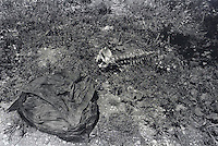 Human pelvis bone and spine lie next to a jacket behind a home in Lubeniq, Kosovo where Kosovar Albanians were massacred by Serbian forces.