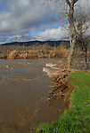 Russian River at high water in February