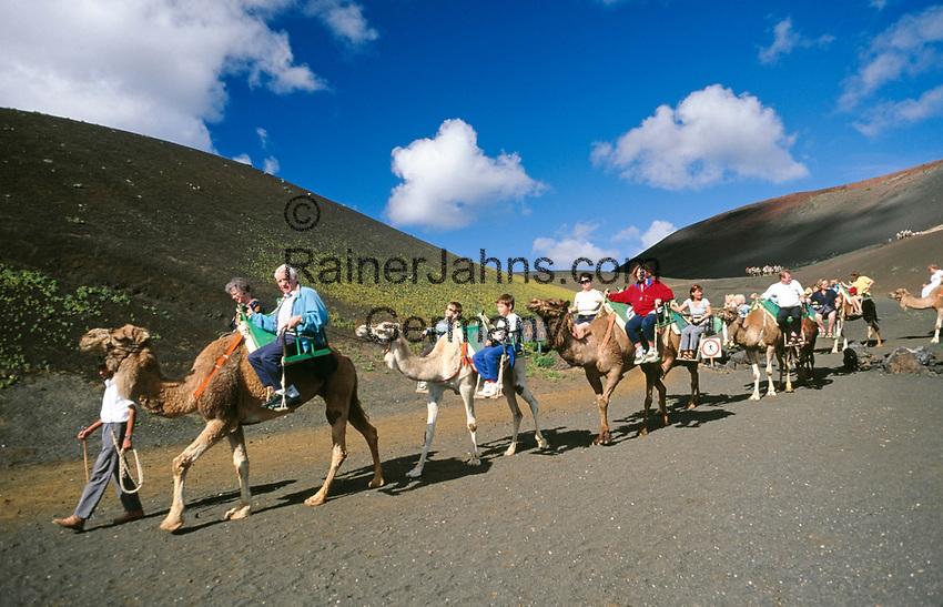 Spanien, Kanarische Inseln, Lanzarote, Timanfaya Nationalpark:  Dromedarreiten durch die Feuerberge   Spain, Canary Island, Lanzarote, Timanfaya National park: camel riding