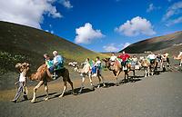Spanien, Kanarische Inseln, Lanzarote, Timanfaya Nationalpark:  Dromedarreiten durch die Feuerberge | Spain, Canary Island, Lanzarote, Timanfaya National park: camel riding