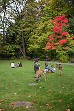USA, Oregon, Ashland, families enjoy a picnic and wildlife at Lithia Park