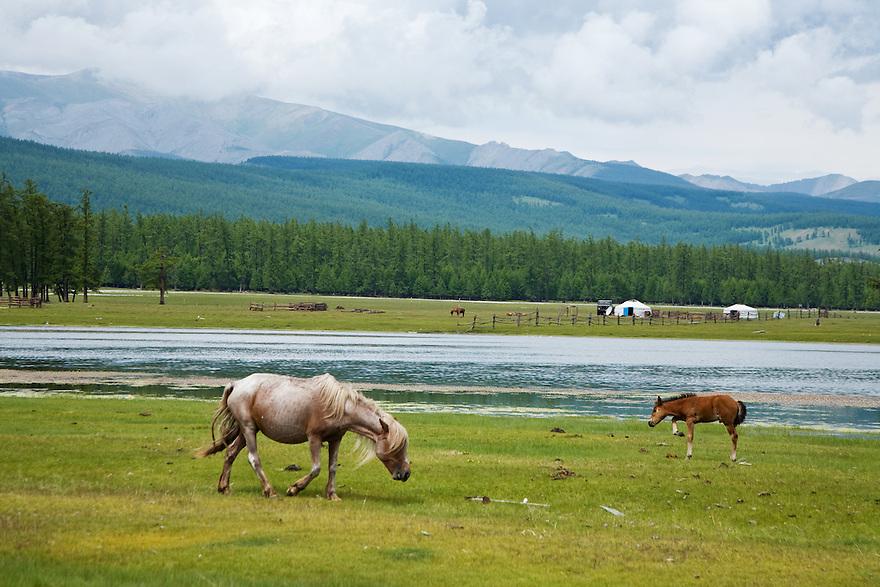 Horses Lake Khovsgol Mongolia