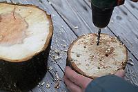 Mit Bohrer werden Löcher in Holzscheibe, Baumscheibe, Holz gebohrt, Löcher, Loch bohren. Wildbienen-Nisthilfen, Wildbienen-Nisthilfe selbermachen, selber machen, Wildbienenhotel, Insektenhotel, Wildbienen-Hotel, Insekten-Hotel