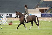 Best Novice Hunter Pony
