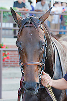 Naples Bay, Jose Lezcano up, wins the GIII Noble Damsel Stakes.