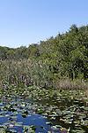 Shark Valley area, Everglades National Park, Florida, USA