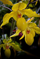 Orchid Collections