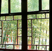 View through the window to the bamboo planted in the cobbled courtyard