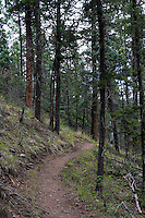 Hiking trail near Red River, New Mexico.