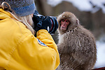 Japan, Japanese Alps, Jami Tarris photographing snow monkey