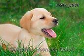 Marek, ANIMALS, REALISTISCHE TIERE, ANIMALES REALISTICOS, dogs, photos+++++,PLMP3080,#a#, EVERYDAY