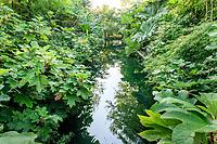 """France, Domaine de Chaumont-sur-Loire, Festival International des Jardins, Prés du Goualoup, """"le jardin miroir"""", bassin bordé de Gunera et hortensia à feuilles de chênes"""