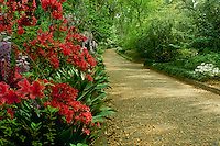 Maclay State Gardens in Tallahassee Florida walking trail with blooming azaleas and wisteria