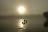 Xingu Indigenous Park, Mato Grosso State, Brazil. Aldeia Yawalapiti. People bathing in the morning mist.
