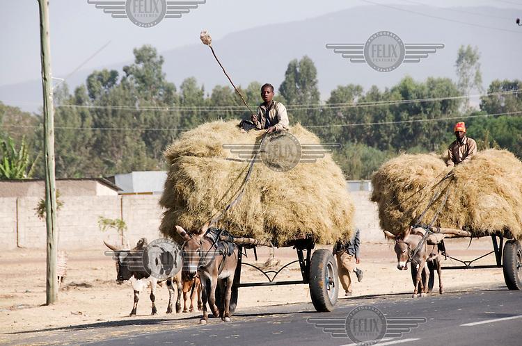 Men on donkey-drawn carts transporting straw.