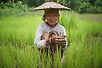 Penan elderly woman, Sigangsey, in rice paddy. The Penan native people are learning to live a sedentary lifestyle which includes living in wooden houses, farming and fishing. They were traditionally nomadic hunter-gatherers. These days they have become forcibly settled as their hunting grounds have been largely destroyed by logging concessions and palm-oil plantations.<br />