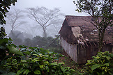 INDONESIA, Flores, detail of a home in the rainforest and fog in Wae Rebo Village